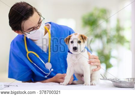 Vet Examining Dog. Puppy At Veterinarian Doctor. Animal Clinic. Pet Check Up And Vaccination. Health