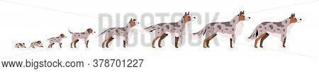 Set Of Cute Puppy, Herding Dog Growth Stage, Development. Domestic Animal Growing From Cub To Adult