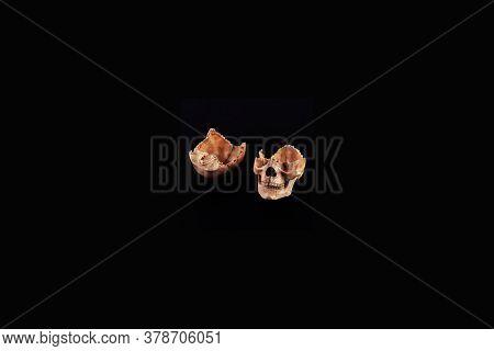 Skull Half Split View Of Medical Lab Human Skull Isolated On Black, Realistic Skull Bone,good For Me