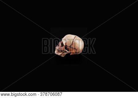Left Hand Side Human Skull View Of Medical Lab Skull Isolated On Black, Realistic Skull Bone,good Fo