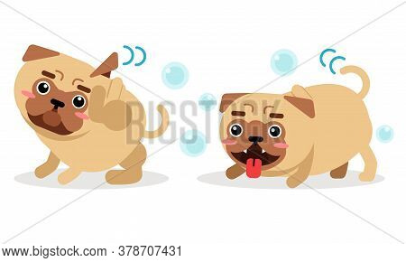 Cute Pug Hanging Out Tongue And Scratching Head With Paw Vector Set