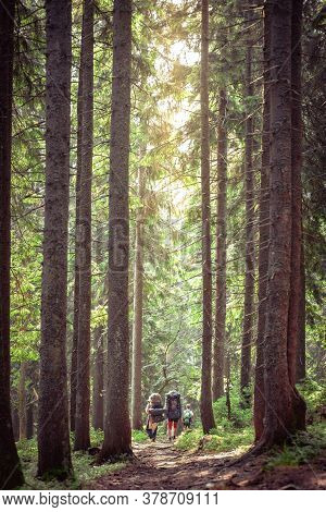 Group Of Tourist Hikers On Mountain Trail In Carpathian Forest