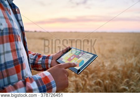 Precision Farming. Farmer Holds Tablet Using Online Data Management Software With Maps, Charts At Wh