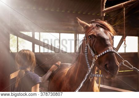 Children Take Care Of The Horse In The Old  Stable. Girls Grooming Horse With Brush,  Cleaning And T