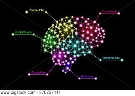 Infographics Of Multicolored Colorful Human Brain Lobes In 3d Digital Neuro Glowing Particles Plexus