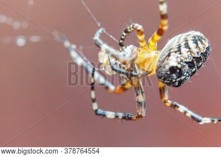 Arachnophobia Fear Of Spider Bite Concept. Macro Close Up Spider On Cobweb Spider Web On Blurred Bro