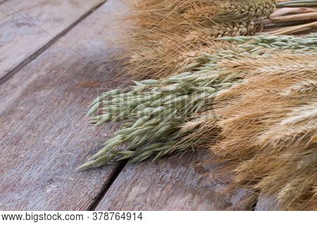 Wheat And Oat Ears On Wooden Background. Ears Of Oat And Wheat On Rustic Wood Planks.