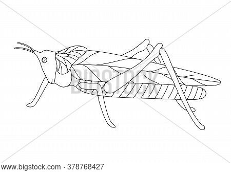 Coloring Book With A Grasshopper On A White Background
