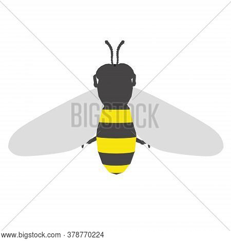 Bee In A Flat Style. View From Above. Bee Isolated On White Background. Vector Illustration