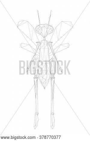 Wireframe Low Poly Humanoid Dragonfly. The Line Beetle Stands On Two Legs. Front View. Vector Illust
