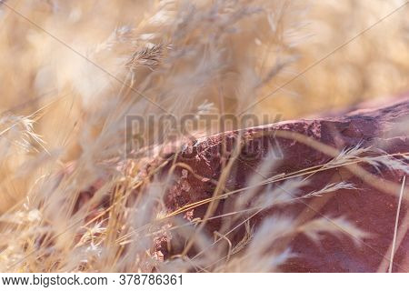 A Warm Arizona Breeze Moves The Tall Grass Around A Sedona Rock