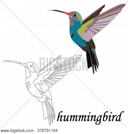 Isolate On A White Background, Black And White And Colorful Bird Hummingbird