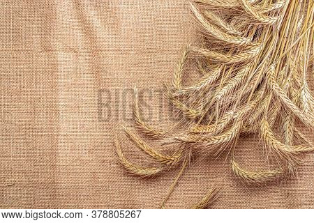 Wheat Flour. Whole, Barley, Harvest Wheat Sprouts. Wheat Grain Ear Or Rye Spike Plant On Linen Textu