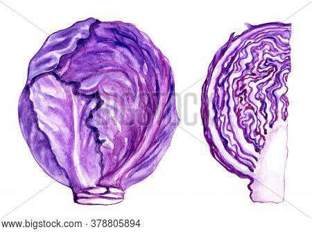 Scotch Kale Or Red Cabbage, Whole Head Of Cabbage And Cutaway, Watercolor Illustration On A White Ba