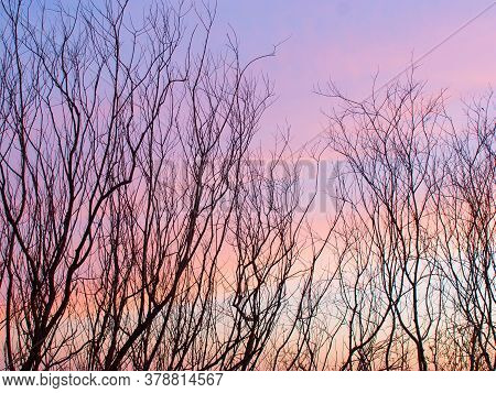 Bare Leafless Trees Silhouetted Against Colorful Sunset. Evening Landscape