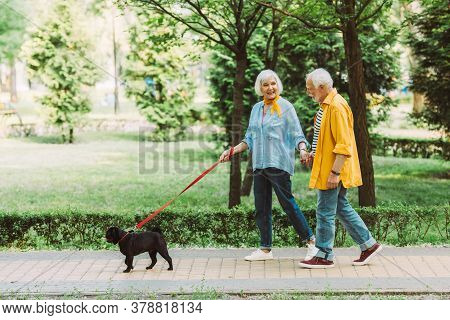 Smiling Elderly Couple Holding Hands While Walking Pug Dog On Leash In Park