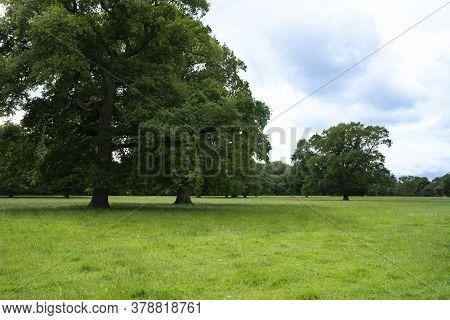 Fresh Air And Beautiful Natural Landscape Of Meadow With Green Tree  In The Sunny Day For Summer Bac