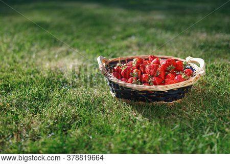 strawberries basket on green lawn background