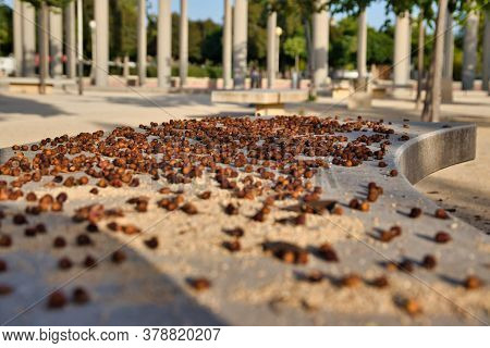 Nuts On A Park Bench On A Sunny Day