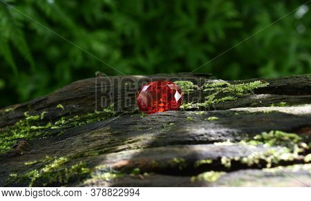 Oval Red Ruby That Has A Luster Laying On The Bark