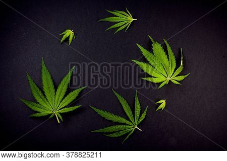 Trendy Pattern Of Different Leaves Of Marijuana And Hemp On A Black Background. Flat Lay. Cannabis P