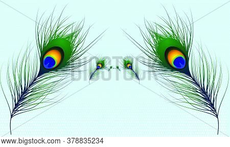 Vector Design Of Peacock Hair On Light Abstract Background