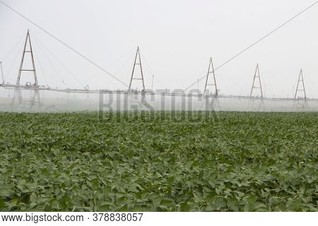 Irrigation Plant For Irrigation Of Farm Fields, Effective Irrigation For Growing Corn.