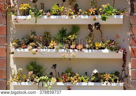 Manicured Succulent Plants On Shelves At An Outdoor Residential Patio In A Garden