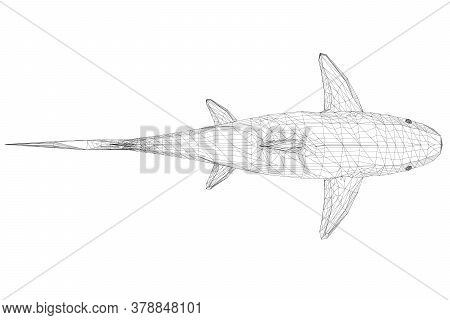 Wireframe Low Poly Blue Shark. 3d. View From Above. Vector Illustration