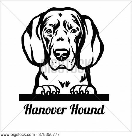 Hanover Hound - Peeking Dogs - Breed Face Head Isolated On White