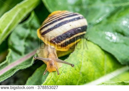 Burgundy Snail Helix On The Forest Surface In Natural Environment Macro Close-up Images Nature Focus
