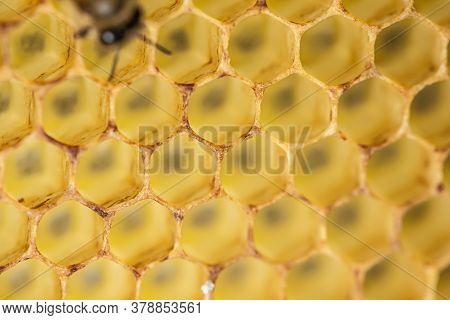 Honey Comb Gold Background Texture Natural Cell Closeup Macro