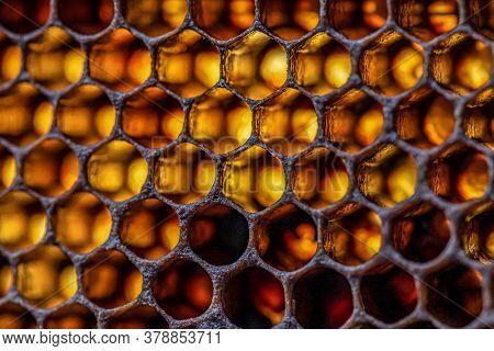 Honey Bee Beehive Wax Frame With Moody Light Shines Closeup Macro