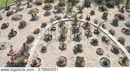 Decorative Flowerbed On Sandy Soil Made Of Many Cacti Of Many Species In Summer