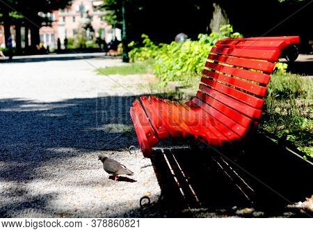 Red Bench In A Public Park And A Pigeon With High Contrast Effect