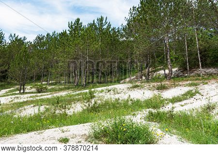 Beautiful Summer Landscape With A Sunny Meadow And Forest. Summer Pine Forest. Travel To Russia. Bea