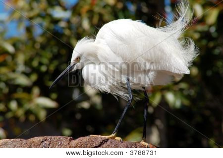 An isolated shot of a white crane bird poster