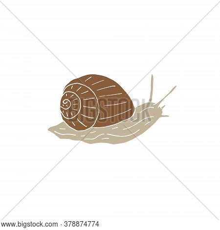 Vector Hand Drawn Doodle Sketch Snail Isolated On White Background