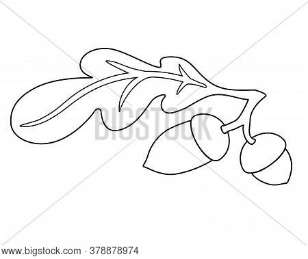 Acorns And Oak Leaf - Vector Linear Illustration For Coloring. An Autumn Oak Leaf And Two Acorns Is