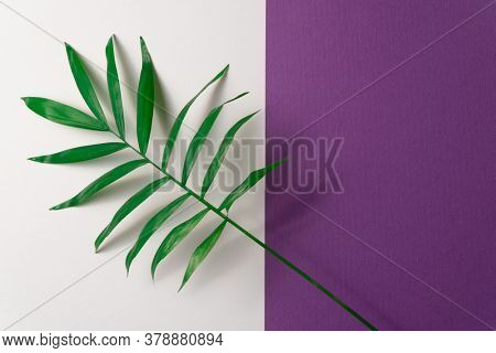 Tropical plant leaf on violet and white paper background. Flat lay, top view, minimal design template with copyspace.