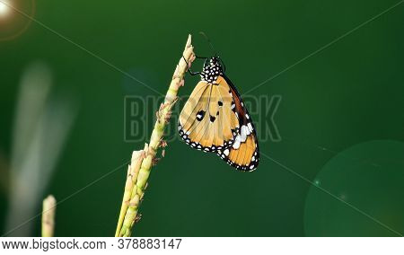 Butterfly On A Flower With A Blur Background.the Monarch Butterfly Or Simply Monarch (danaus Plexipp