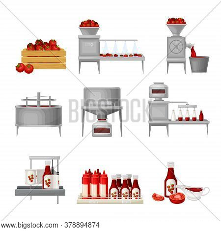 Ketchup Manufacturing Process With Tomato Harvesting, Washing And Squeezing Vector Illustration Set