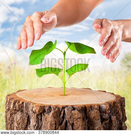 Woman Hand Protect Young Plant On Blur Green Nature Background. Concept Eco Earth Day.