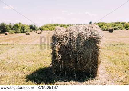 Close Up Hay Stack Texture. Hay Stack Backgound. Hay Field.