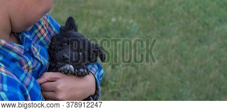 A Girl In A Plaid Blue Shirt Is Holding Her Little Black Dog. Banner. A Beautiful Puppy Looks At The