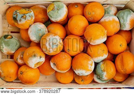A Rotting Orange Covered In Mold. Damage To Food In The Warehouse.
