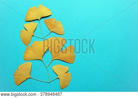 Autumn Card. Dry Yellow Fan-shaped Leaves Of Ginkgo Tree  ( Ginkgo Biloba ) On Blue Paper. Free Spac