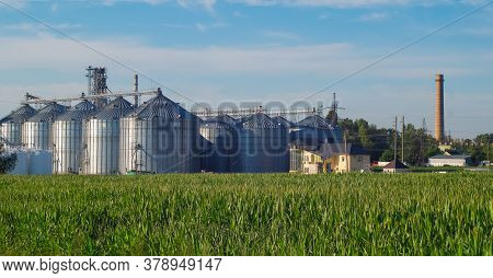 Granary, Elevator - An Industrial Complex For Storage, Sorting. Agro-processing And Manufacturing Pl