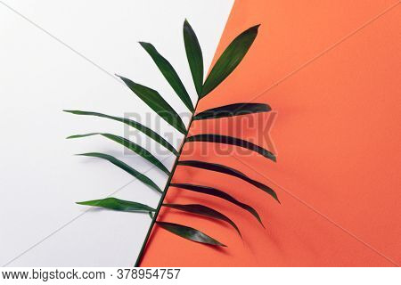 Tropical plant leaf on orange and white paper background. Flat lay, top view, minimal design template with copyspace.