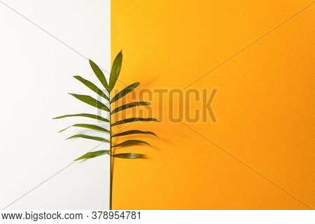 Tropical leaf on yellow and white paper background. Flat lay, top view, minimal design template with copyspace.